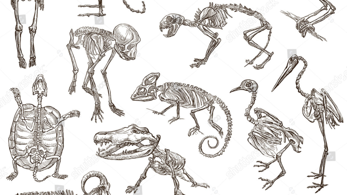 Life and Living: Skeletons of Animals