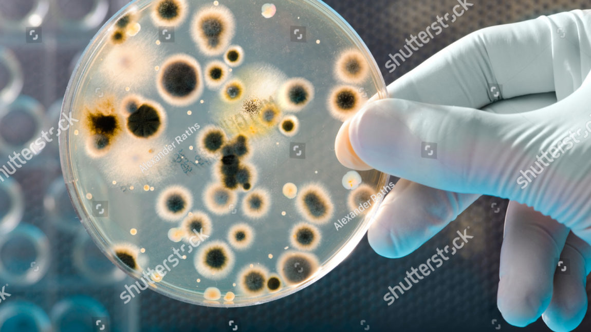 Microbial Growth of Bacteria