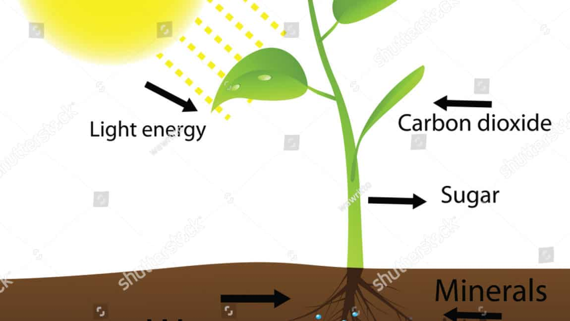 The Effect of light exposure on Photosynthesis